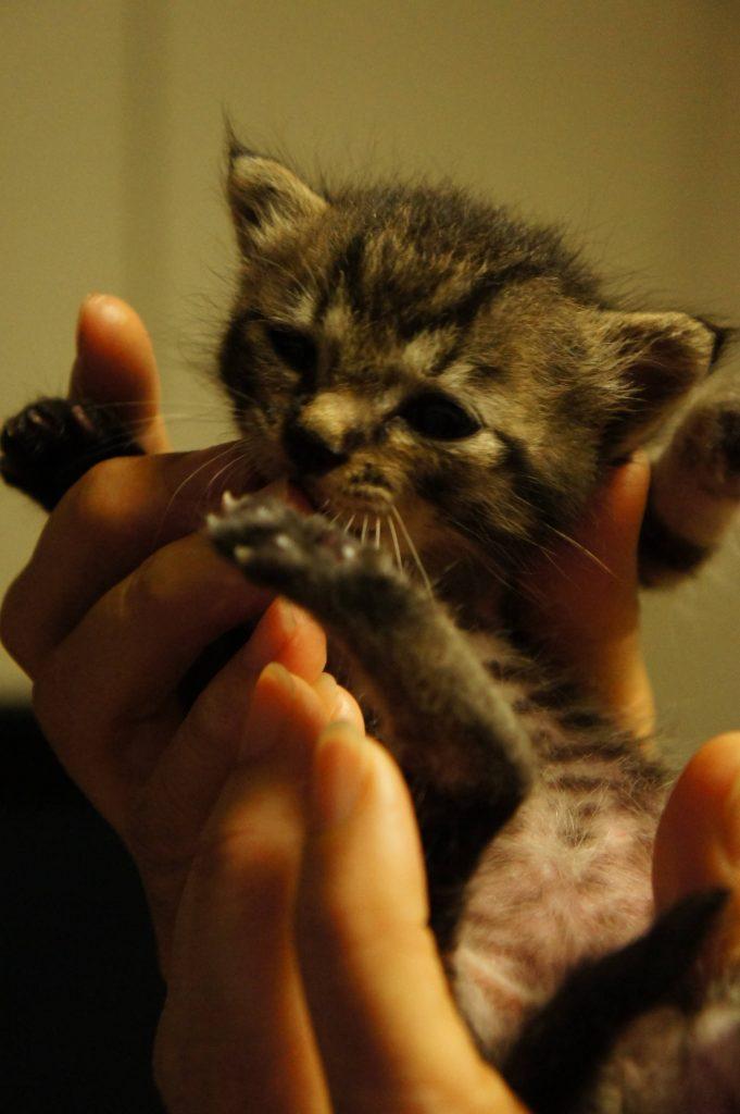 手の平サイズ