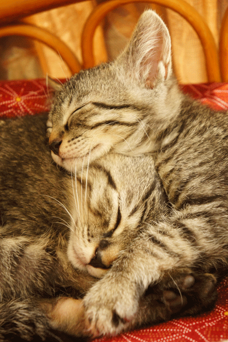 モモとタロウの寝顔